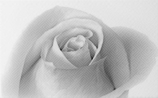 Декор настенный Unitile Камелия черый декор 01 250х400